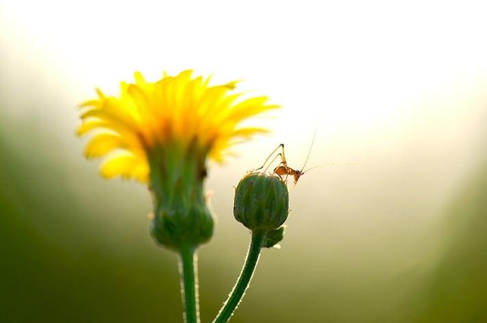 逆光で撮影した花と昆虫の写真