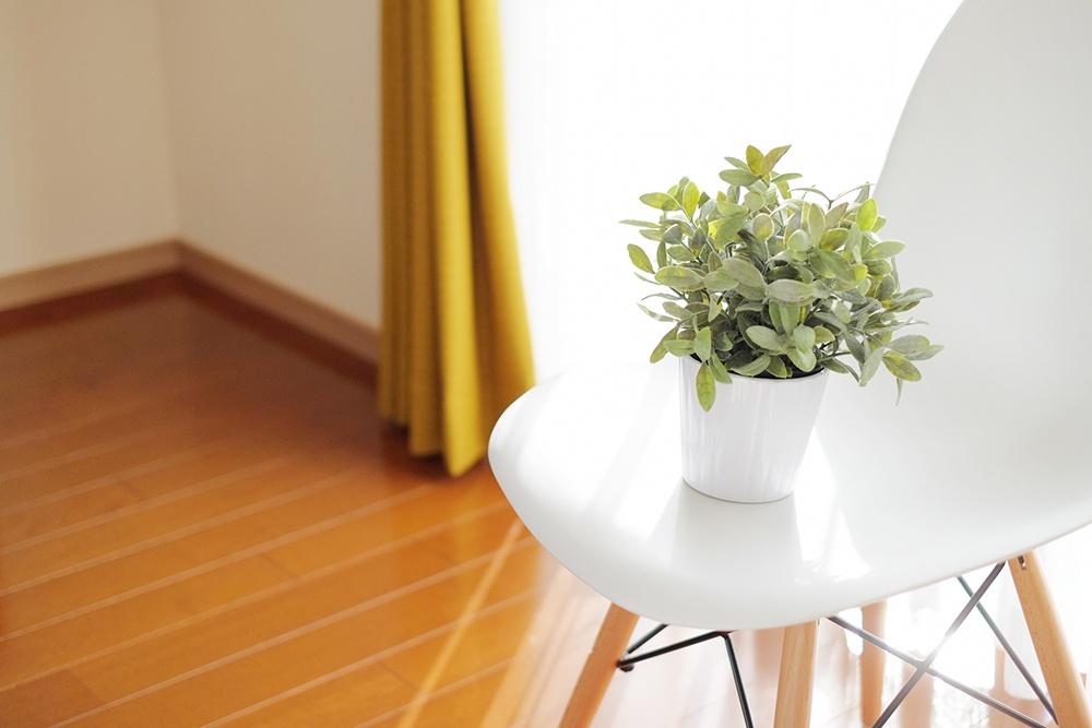 明るい室内で撮影された観葉植物の写真