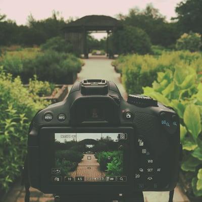カメラの液晶モニターを見ながら写真の画づくり