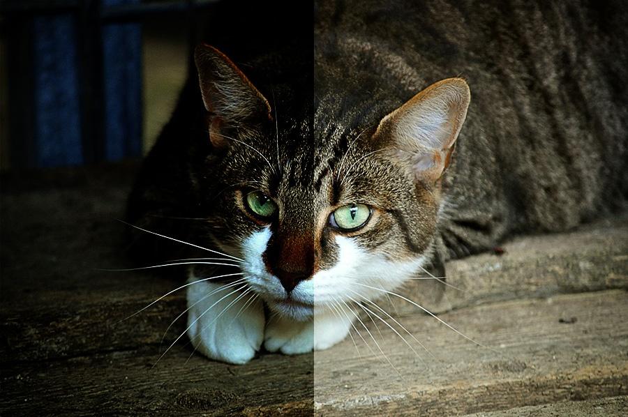 catseyes.jpg
