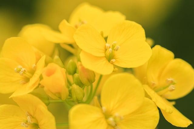 マクロレンズで撮影した花の写真
