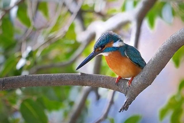 望遠レンズで撮影した野鳥の写真